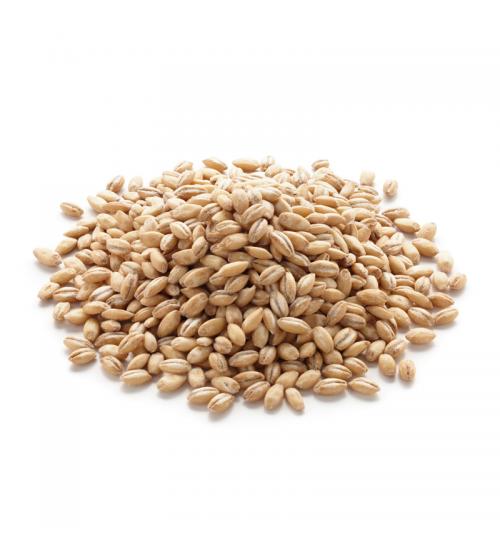 Joo (Barley)