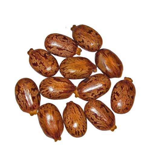 Castor Bean (Tukhm-e-Arandi)