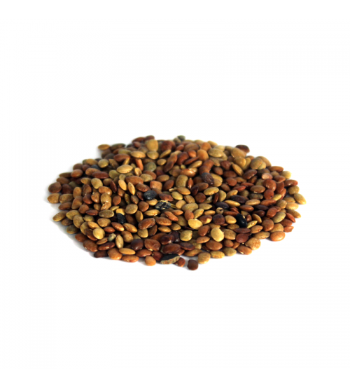 Chinese Chaste Tree Seeds